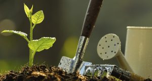 Guidelines And A Brief Overview On Becoming Successful With Horticultural Business