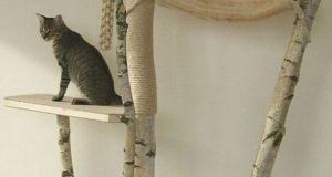 Cat Condos - The Perfect Alternative to Your Cat Sleeping on Your Pillow