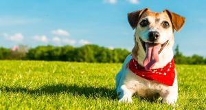 Things A Dog Need To Be Happy And Healthy